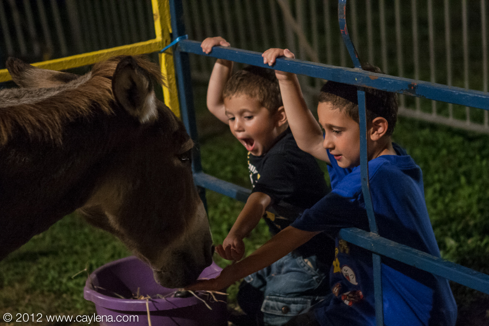 Matthew, 3, and his brother Jacob, 6, of Lagrange feed the horse in the petting zoo Friday at the Dutchess County Fair in Rhinebeck. (Aug. 24, 2012)